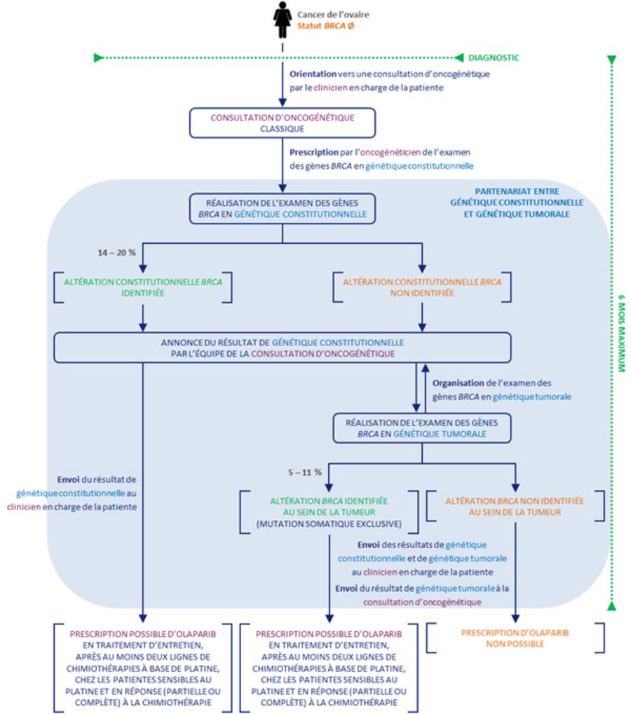Cancer de l'ovaire et inhibiteur de PARP - Oncogénétique et ...