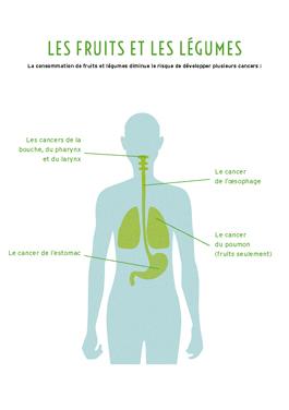 Image : l'effet protecteur des fruits et légumes contre certains cancers
