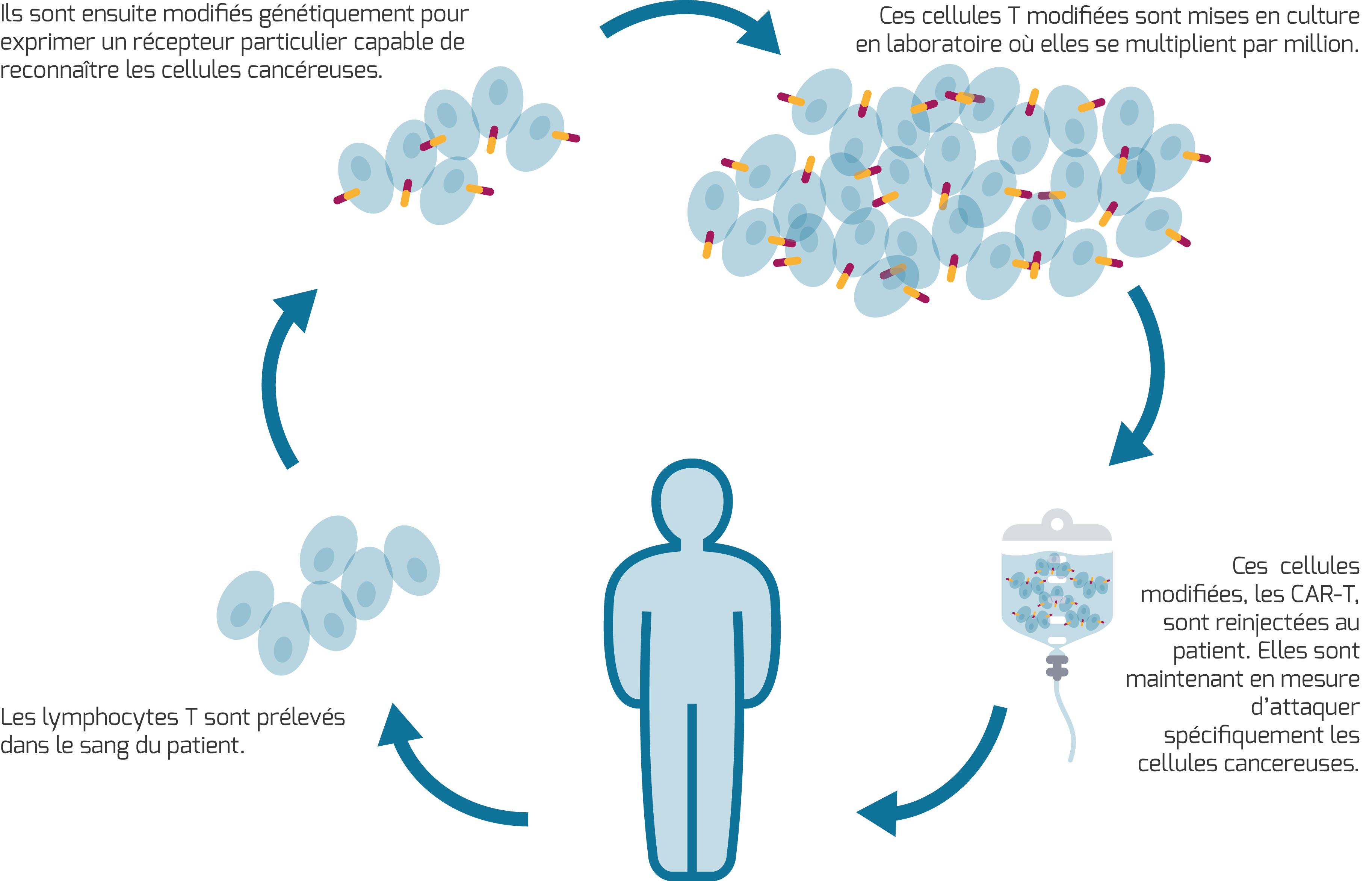 Le transfert adoptif de cellules