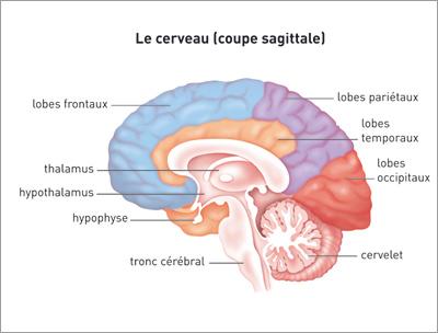 Probleme de memoire tumeur