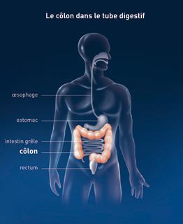 emplacement-colon