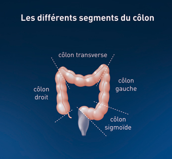 colon droit colon gauche
