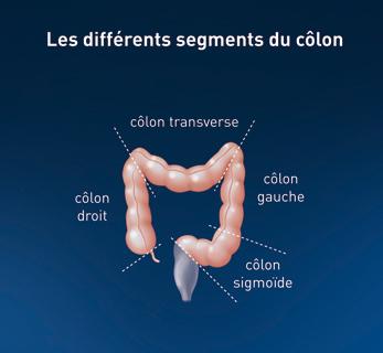 segments-colon