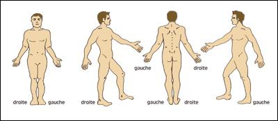 histoire schéma corporel